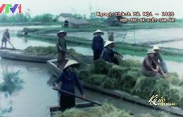Ký ức Việt Nam: Hợp tác xã biết làm ăn