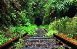 Ngược dòng thời gian với đường hầm xe lửa Helensburgh