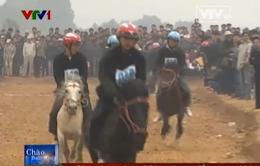 Đua ngựa và những câu chuyện thú vị chỉ có ở Việt Nam