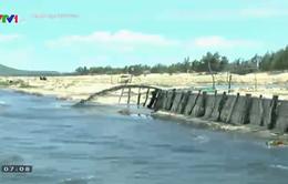 Phú Yên: Xả thải gây ô nhiễm môi trường vì nuôi tôm ồ ạt