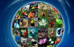 3/3 - Ngày Thế giới động vật hoang dã