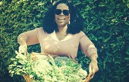 Hàng triệu lượt like cho bức ảnh Oprah Winfrey thu hoạch hoa quả tại vườn