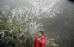 Xuất hiện băng tuyết tại Sa Pa