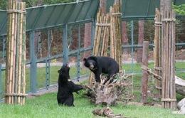 Duy trì Trung tâm cứu hộ gấu Tam Đảo