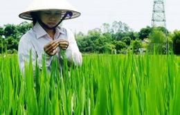 Sử dụng thuốc BV thực vật gây thiệt hại phải bồi thường