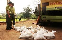 Quảng Trị: Bắt vụ vận chuyển động vật hoang dã lớn
