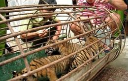 Chống buôn bán động vật hoang dã: Còn gian nan!