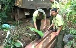 Quảng Trị: Phát hiện vụ khai thác gỗ lậu lớn