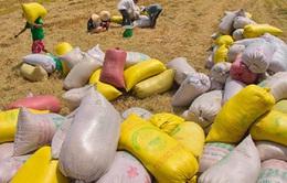 Kiểm tra, giám sát việc mua tạm trữ lúa gạo