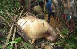 Phát hiện nhóm đối tượng săn bắn động vật hoang dã