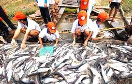Đề xuất tăng thời hạn cho vay vốn nuôi cá tra