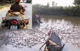 Cấm vận chuyển gia cầm vùng biên giáp Campuchia