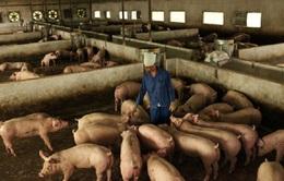 Người chăn nuôi chờ được giãn nợ