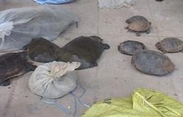 Phát hiện vụ vận chuyển động vật hoang dã từ Lào