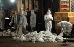 Trung Quốc: Đóng cửa hàng loạt chợ gia cầm sống