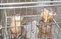 180 động vật hoang dã bị rao bán trên mạng