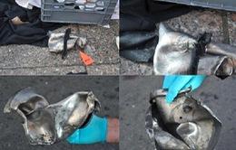 Có thêm đầu mối quan trọng của vụ nổ bom Boston