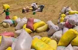 Công khai kết quả mua tạm trữ thóc, gạo
