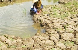361,4 tỷ đồng để chống khô hạn, xâm nhập mặn