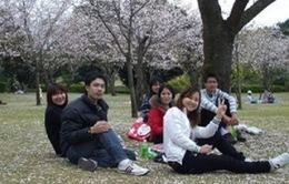 Bùng nổ du học Nhật Bản