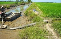 Bình Định: Hơn 7.000 ha đất lúa phải bỏ hoang