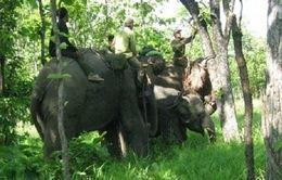 Cứu hộ thành công voi rừng sập bẫy