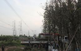 Hệ thống điện miền Nam đã khôi phục hoàn toàn