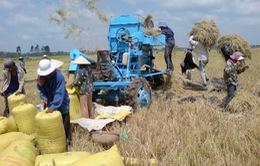 Thủ tướng chỉ đạo mua tạm trữ 1 triệu tấn thóc gạo