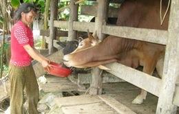 Quảng Trị hỗ trợ nông dân phát triển kinh tế
