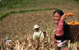 Việt Nam trong top đầu đạt mục tiêu xóa đói giảm nghèo
