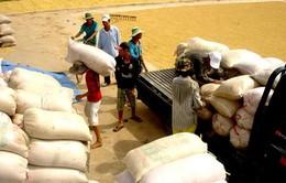 14 NH thực hiện cho vay mua thóc, gạo tạm trữ