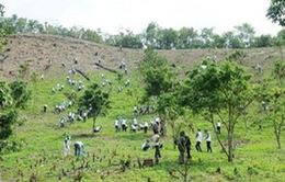 Nhật Bản hỗ trợ Việt Nam thực hiện dự án trồng rừng