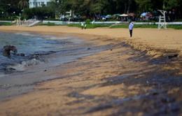 Tràn dầu ở bãi biển Quy Nhơn, Bình Định