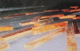 Đối tượng chở gỗ lậu ở Khánh Hòa ra đầu thú