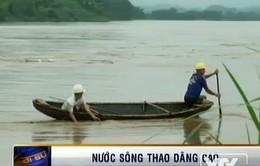Nước sông Thao dâng cao, gây sạt lở nghiêm trọng