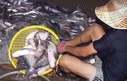 64 tỉ đồng phát triển bền vững cá tra
