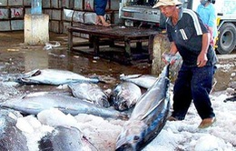 Xuất khẩu cá ngừ sang Bồ Đào Nha tăng trưởng ấn tượng