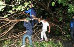 Tìm thấy thi thể nạn nhân hiếu kỳ xem sóng ở Đồ Sơn