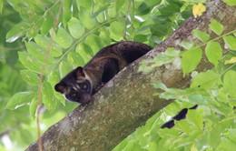 """10 loài vật """"hiếm - độc"""" ở Vườn quốc gia U Minh Thượng"""
