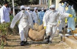 Xuất hóa chất cho Tiền Giang phòng, chống dịch cúm A/H5N1