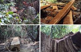 """Nỗi đau rừng đặc dụng công khai bị """"xẻ thịt"""""""