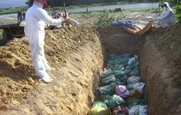 Bạc Liêu: Tiêu hủy trên 3.500 con vịt nghi cúm gia cầm