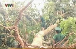 Quảng Trị: Thêm 1.400 chiến sĩ giúp dân khắc phục hậu quả bão số 10