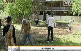 """""""Vườn cộng đồng"""" cho người tị nạn tại Australia"""