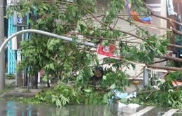 VIDEO: Cây xanh trên những con đường đẹp nhất Đà Nẵng bị quật đổ