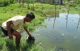 Khi cả làng uống nước ruộng...