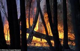 Australia: Cáo buộc quân đội gây cháy rừng ở Lithgow