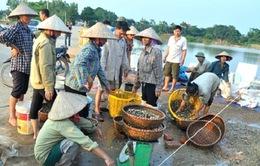 Triển khai chế tài xử phạt hoạt động thu mua ốc bươu vàng