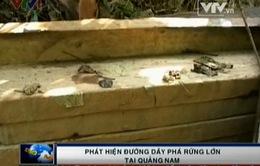 Phóng viên VTV phát hiện đường dây phá rừng lớn tại Quảng Nam