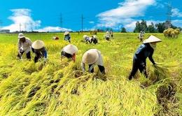 Thiệt hại nông nghiệp mỗi năm khoảng 8 triệu đồng/hộ dân